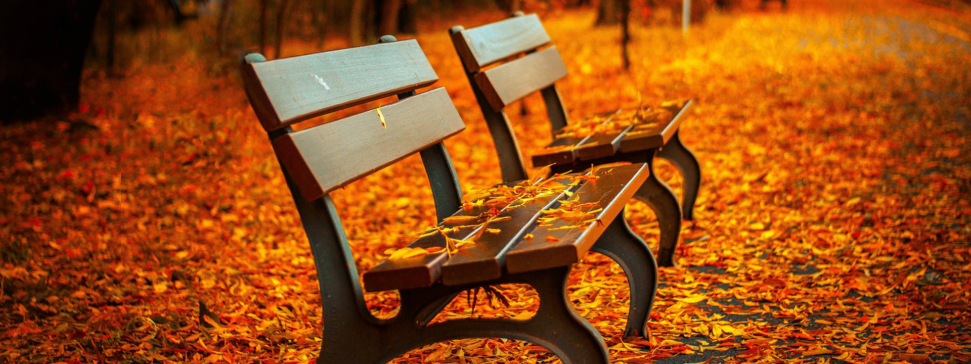 Fall Festival Bridgewood
